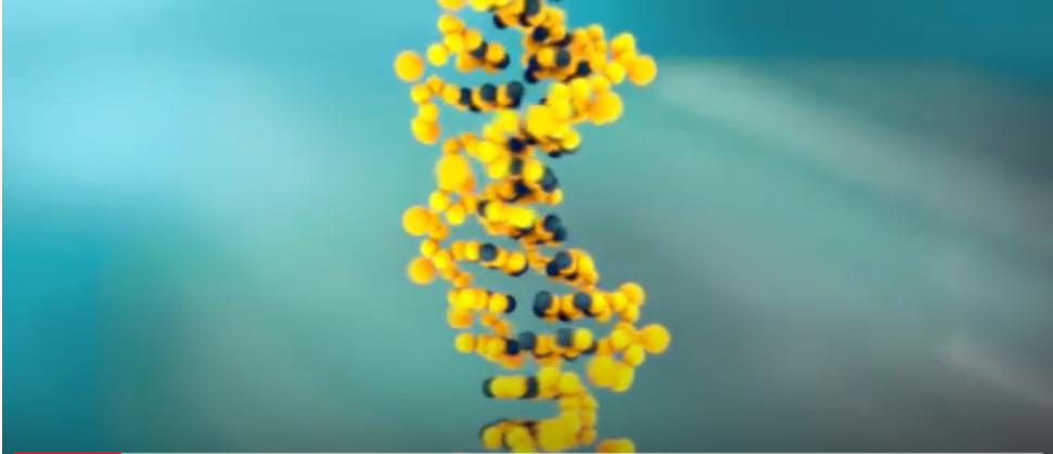 DNS -Telomer